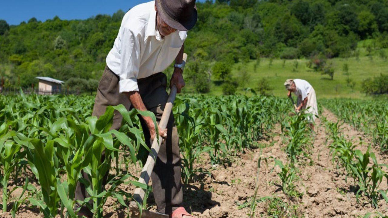 Estados Unidos ofrecerá visas de trabajo para agricultores guatemaltecos