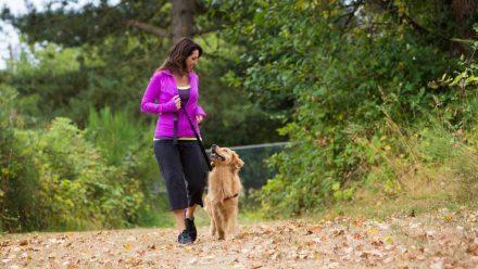 El mejor amigo del corazón: tener un perro se relaciona con mejor salud cardiovascular