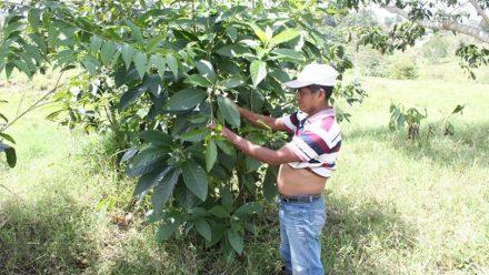 Deploran asesinato de científico Maya, sacrificado por ignorancia y fanatismo