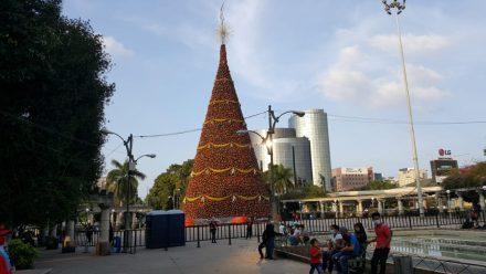 Festival Árbol Gallo alegra a guatemaltecos, entre pandemia de COVID-19